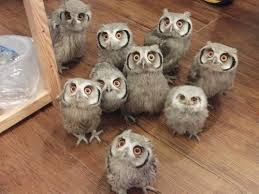 | <b>cute</b> life | <b>Owl</b>, <b>Beautiful owl</b>, <b>Owl</b> pictures