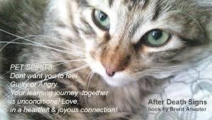 Loss Of A Cat Quotes Custom Cat Loss Quote Greiving Over Cat Loss Inspirational Cat Death Brent