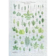 Tree Identification Chart Leaf Identification Chart