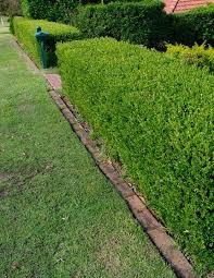 jardineria cercos con arbustos