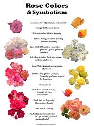 Rose Color Meanings (will likely make a different thing.