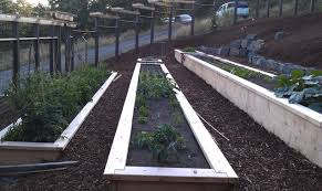 raised beds on a slope eclectic