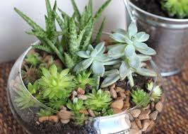 Small Picture Succulent garden care indoor and tips 5 House Design Ideas