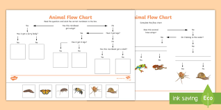 Animal Flow Chart Ks2 Animal Flow Chart Worksheet Animal Flow Chart Flow Chart