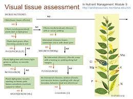 Plant Nutrient Deficiency Symptoms Garden Design Ideas