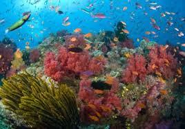 Природа растения и животные морей и океанов Растительный мир морей и океанов