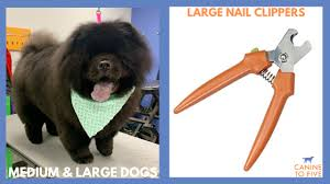 t your dog s nails