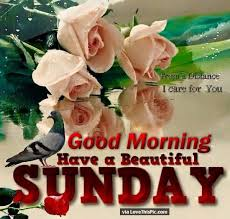 Sunday Beautiful Quotes Best Of Good Morning Have A Beautiful Sunday Quote With Flowers Sunday
