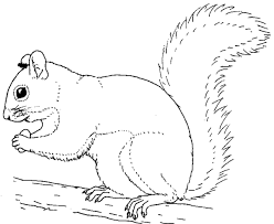 Small Picture Squirrel To Color S For Squirrel Coloring Pages Printable