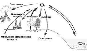 Реферат на тему Круговороты веществ в природе  Кислород наиболее активный газ В пределах биосферы происходит быстрый обмен кислорода среды с живыми организмами или их остатками после гибели