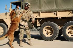 army training phase restrictions u s navy police dogs and their handlers deployed to