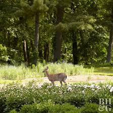 deer repellent for gardens. Plain Gardens Deer Walking Through Clearing On Deer Repellent For Gardens