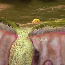 What Is Mucus? What Is Phlegm? Causes of Coughing Up Mucus
