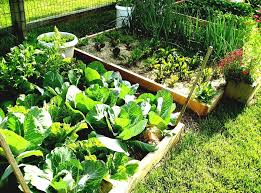 diy vertical vegetable gardening ideas