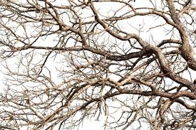 Tree twigs with bare trunks and branches Stock Photo - 27748054