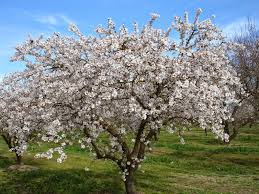Image result for pictures of Biblical trees