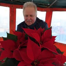 Weihnachtssterne In Glückstadt Blühende Pracht Zu