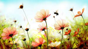 Flowers Nature Wallpapers - Top Free ...