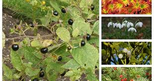 poisonous plants to keep out your garden if you ve got kids manchester evening news