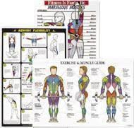 Wall Charts Display Muscles Corresponding Resistance