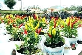 order plants online. Vegetable Garden Plants Plant Spacing How Raised Order Online For Sale India .