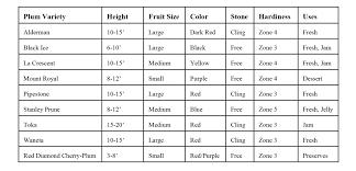 Plum TreePlum Fruit Tree Varieties