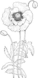 Poppy Blossom Coloring Page From Poppies