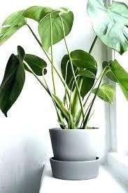 plant pots indoor large indoor planters large interior plant pots large indoor planters pots indoor plant plant pots indoor