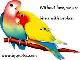 Love Bird Quotes