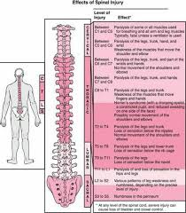 Spinal Cord Injury Quick Reference Of Nerve Innervations