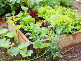 small raised bed vegetable garden garden design calimesa ca
