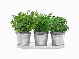 Accessories: Wall Mounted 6 Pot Herb Planter - Indoor Herb Garden
