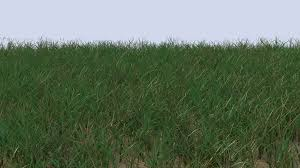 grass png. Wonderful Grass FileGrasspng To Grass Png
