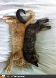 Katzenliebe Lustige Bilder Auf Spassnet