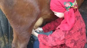 Milking a cow. Kievka, Kazakhstan - YouTube