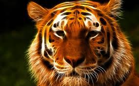 tiger face wallpaper hd. Simple Wallpaper Tigerfacewallpaperhd8jpeg Throughout Tiger Face Wallpaper Hd G