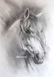 wild horse drawings in pencil. Delighful Wild Image Result For Wild Horse Drawings In Pencil In Wild Horse Drawings Pencil R