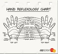 Hand Reflexology Chart Vector Illustration