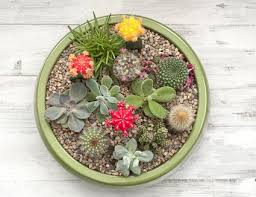 container gardening for beginners. It\u0027s Easy To Make A Succulent Container Garden Gardening For Beginners