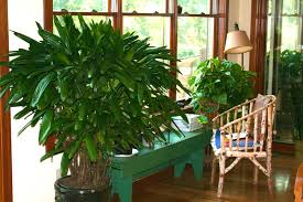 live better with houseplants