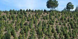 Resultado de imagen para mexico forestas