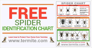 Free Spider Identification Chart Free Spider Identification Chart Spider Bite First Aid