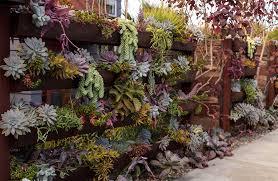 vertical succulent garden patioworld