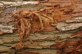 tree bark repair methods. Beautiful Bark For Tree Bark Repair Methods 0