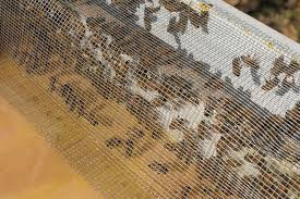picture of place feeder on hive and fill with syrup