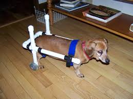 diy photo tutorial to make a small dog wheelchair w wheels and