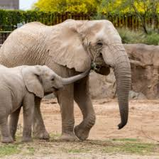 animals in zoo pictures. Wonderful Animals Elephant Throughout Animals In Zoo Pictures O