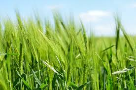 organic farming pros and cons essay and debate organic farming pros and cons