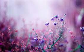 flower hd wallpapers top free flower