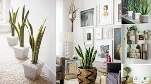 now pick which plant goes best with your home décor and preserve mother earth in